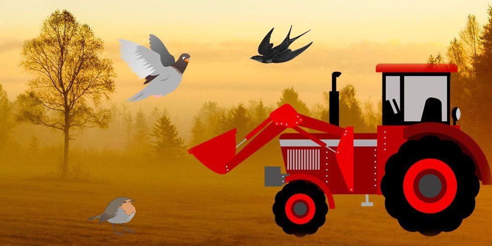 La fábula La golondrina y los pájaros sobre la prudencia