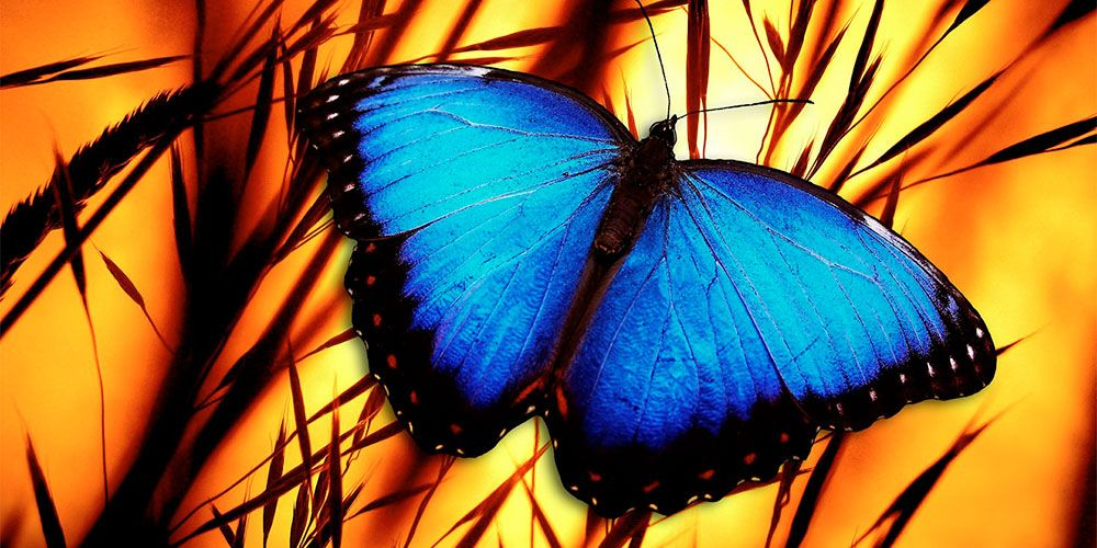 Cuento de La mariposa azul sobre la responsabilidad de nuestros actos