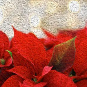 La Flor de Pascua. Leyenda mexicana para Nochebuena