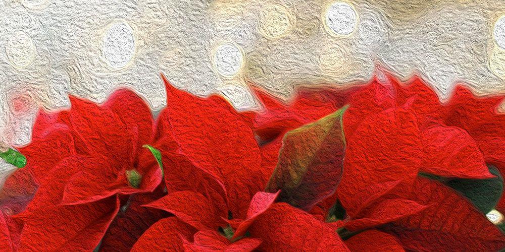 Una leyenda mexicana de Navidad: La Flor de Pascua