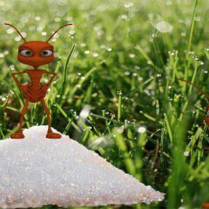 Las dos hormigas. Fábula sobre el miedo a los cambios