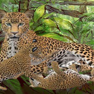 Las lágrimas del guepardo. Leyenda africana para niños