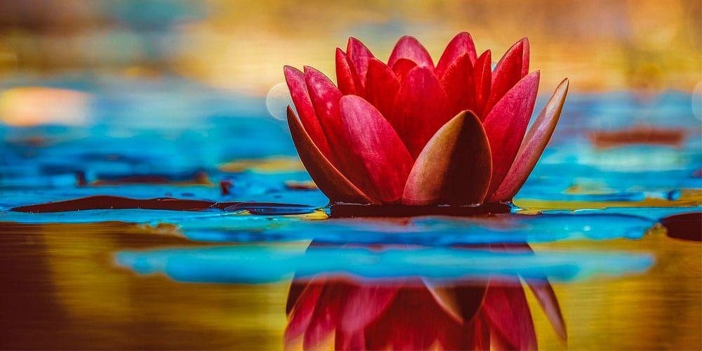 Reflexiones sobre el amor propio: Para ser feliz, empieza por quererte y aceptarte