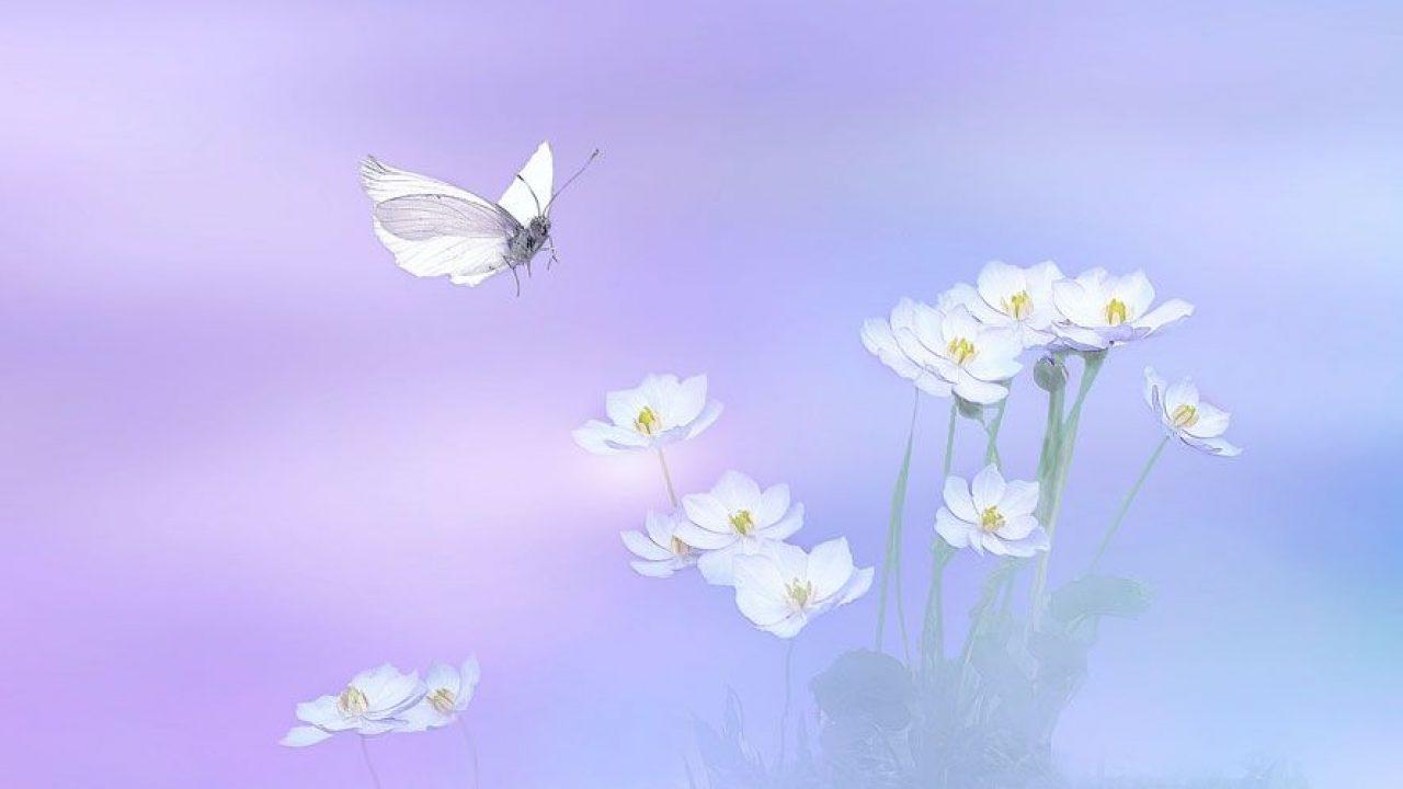 La Mariposa Blanca Cuento Japonés Sobre El Amor Eterno