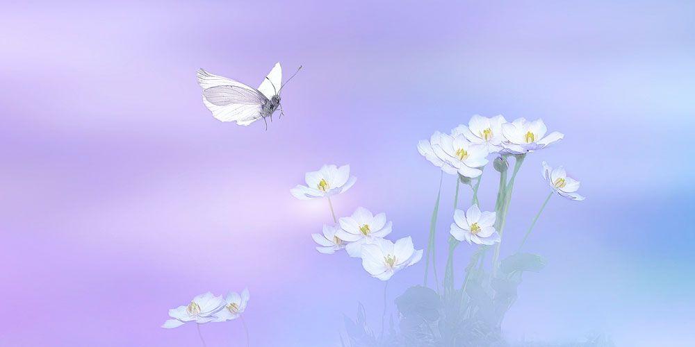 Cuento de la mariposa blanca, un cuento para adolescentes y adultos sobre el amor eterno