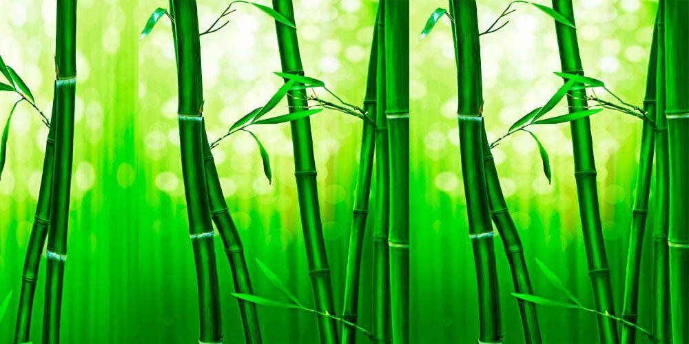 Fábula sobre la perseverancia: el Helecho y el bambú