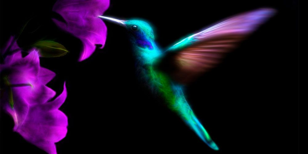 Leyenda maya para niños: Leyenda del colibrí