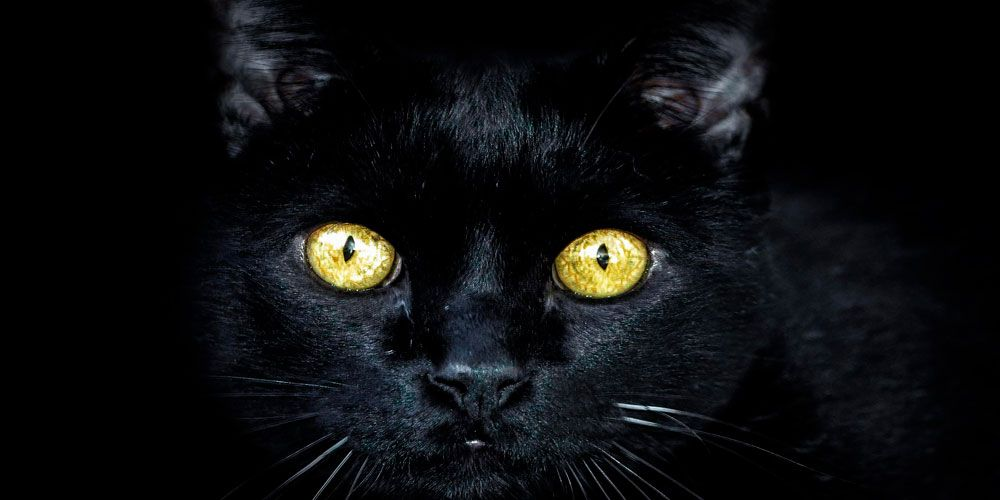 El gato negro, un relato de terror de Allan Poe para adolescentes y adultos
