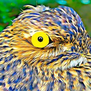 El lamento del pájaro Guajojó. Una leyenda de amor de Bolivia
