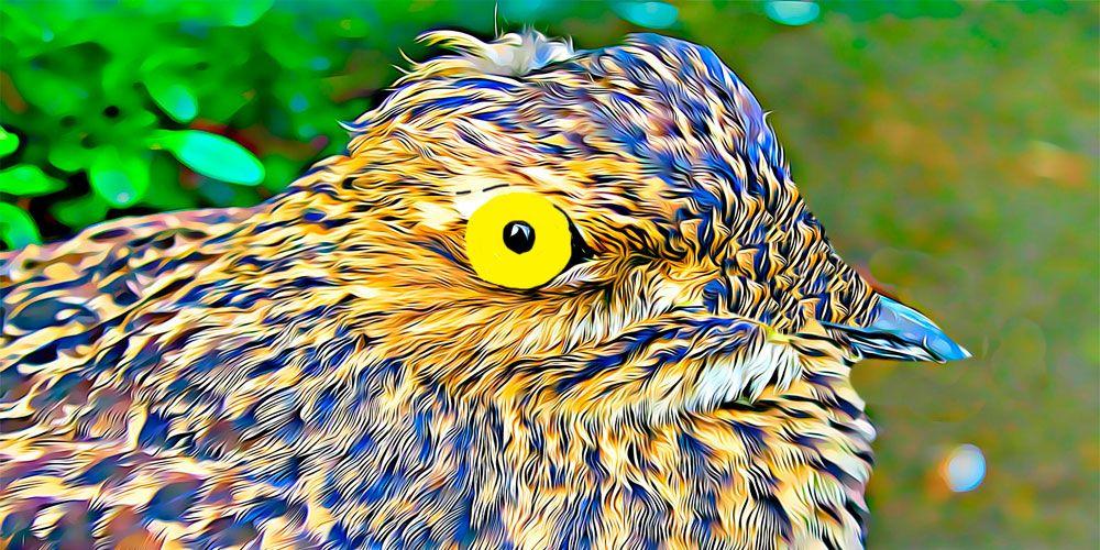 Leyenda del lamento del pájaro Guajojó