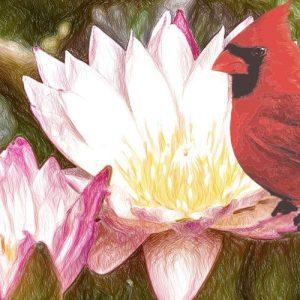La flor de loto. Leyenda maya para adolescentes y adultos