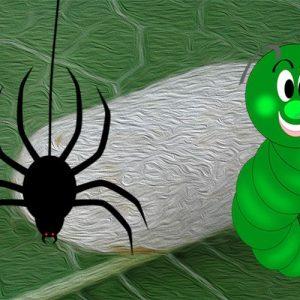 La araña y el gusano de seda. Fábula con valores para niño