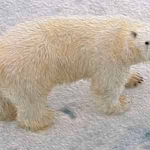 Por qué los osos polares tiene la cola corta. Leyenda escandinava para niños